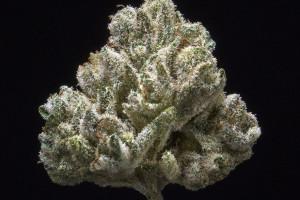 Shishkaberry Marijuana Strain product image
