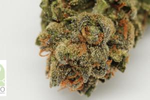 Mr. Nice Marijuana Strain image