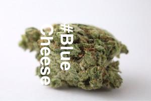 Blue Cheese Marijuana Strain product image