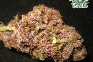 Purple Diesel Marijuana Strain image