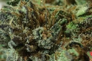 AK-47 Marijuana Strain image