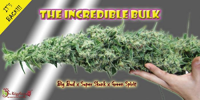 bremerton bulk herbs