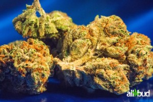 Alien Dawg Marijuana Strain featured image