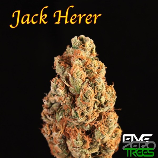 Auto jack herer advanced seeds