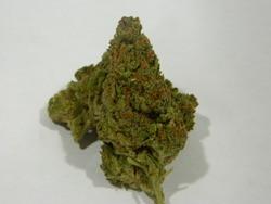 Game Changer | Marijuana Strain Reviews | AllBud