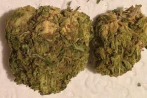 Green Crack Marijuana Strain image
