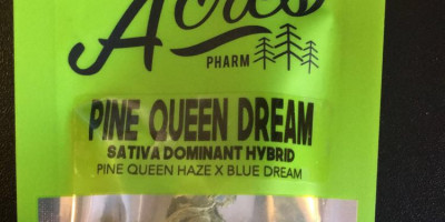 Pine Queen Dream