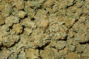 Double Dream Marijuana Strain product image