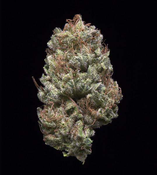 707 Headband Marijuana Strain Reviews Allbud