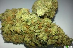 Sour Diesel Marijuana Strain image