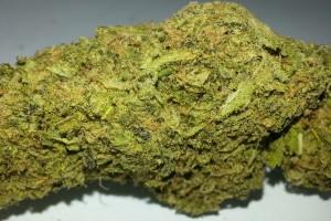 Jack Herer Marijuana Strain image