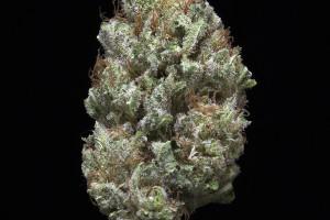 White Berry Marijuana Strain product image