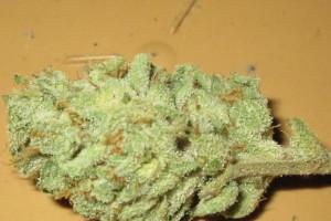 Cinex Marijuana Strain image