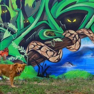 Arte de Rua e Graffiti by Dgiphi aka Asur