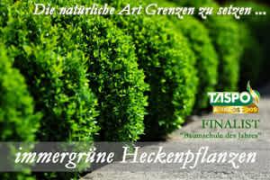 Heckenpflanzen_300_200
