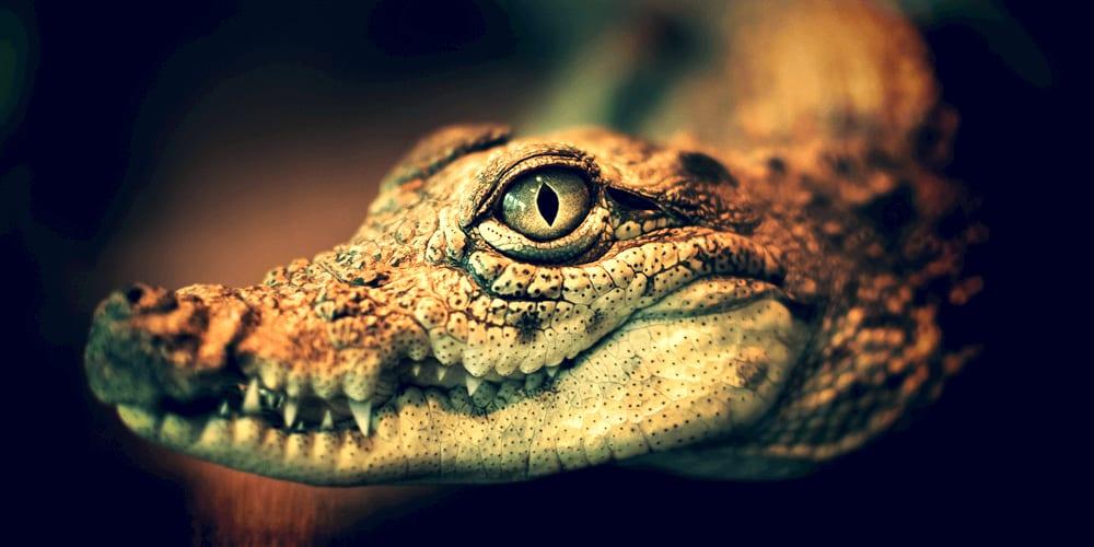 Crocodile Paradox