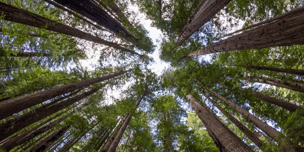 12 Tree Facts That Prove Trees Are Amazing