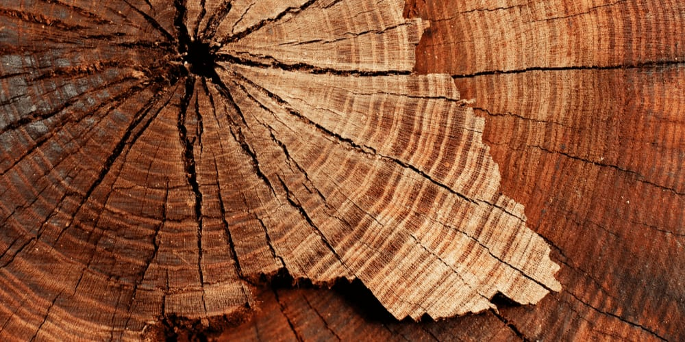 Tree structure: annual rings or just dead weight?