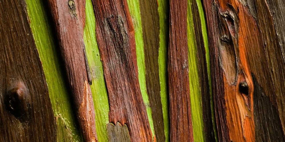 Rainbow eucalyptus bark is a natural palette!