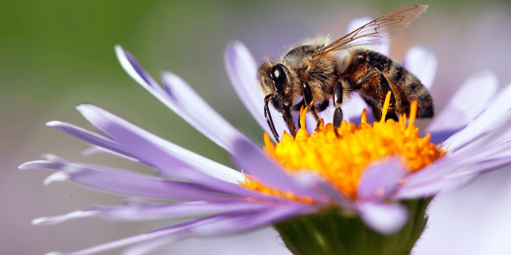 Bees can link symbols to numbers