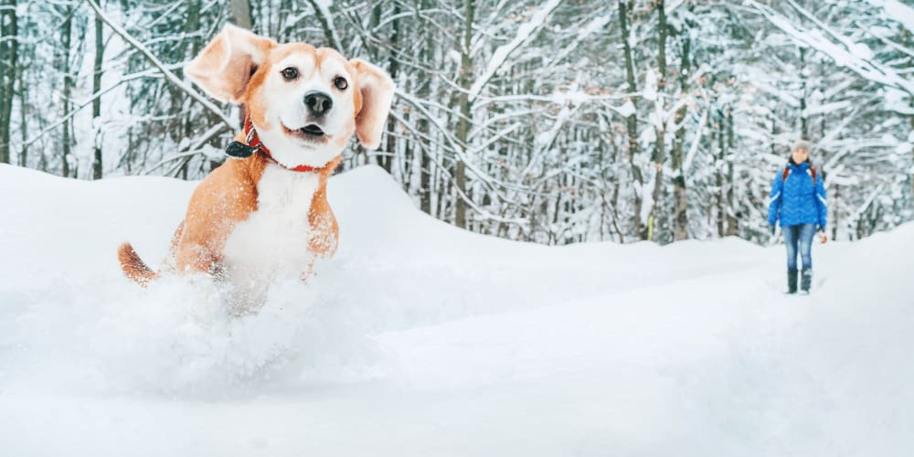 Walk your dog and let it enjoy the snow with you!