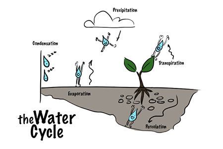 Fun scheme of the water cycle