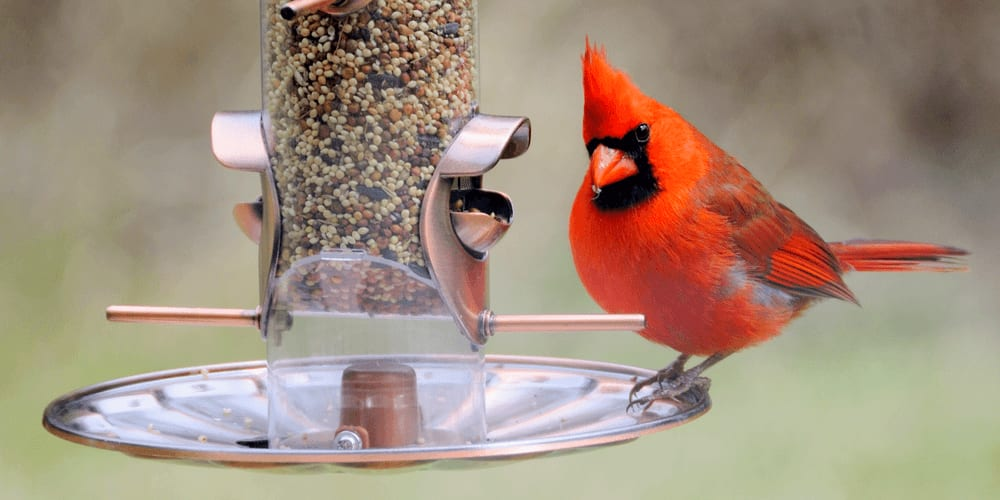 The Basics of Bird Feeding