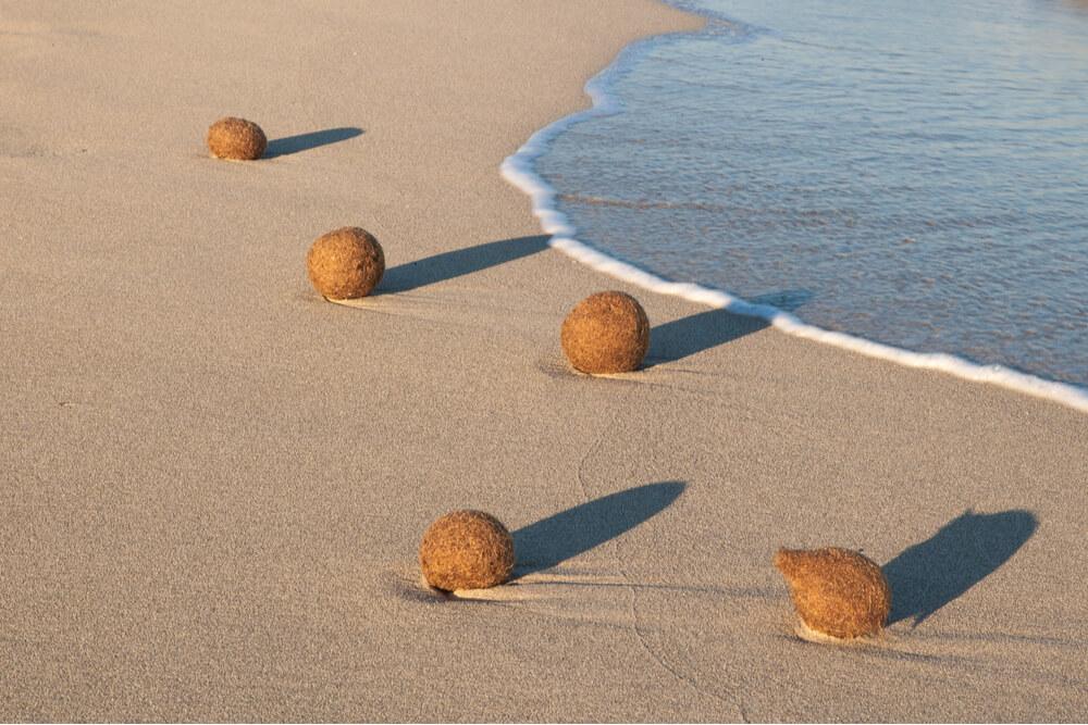 Balls of Neptune seaweed in the beach on Ibiza, Spain