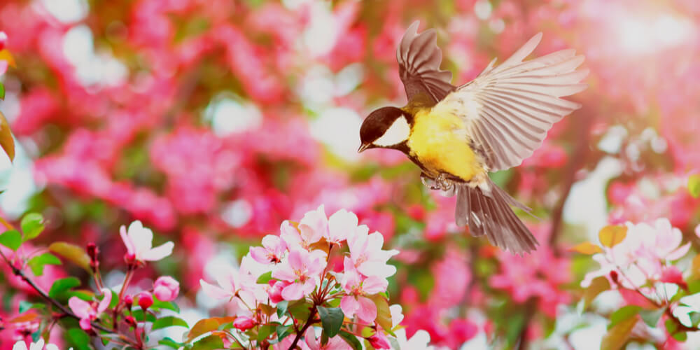 Spring flowers and a bird