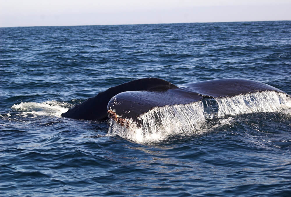 Herman Melville's Moby Dick is also believed to have been inspired by the events that took place just off Chile's coast