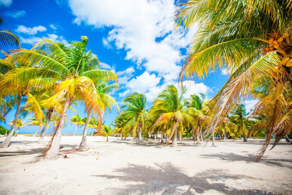 Palm trees on white sand beach. Playa Sirena, Cayo Largo