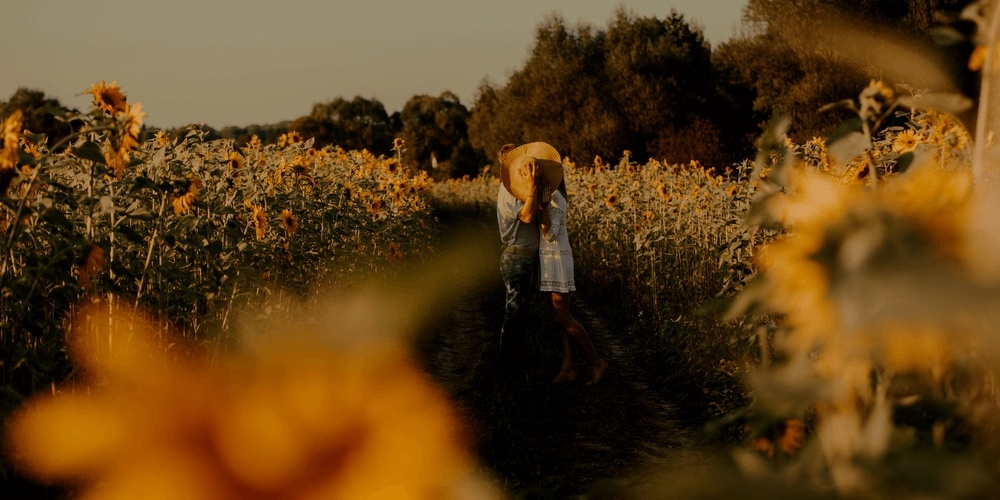 Romantic couple in a field of sunflowers