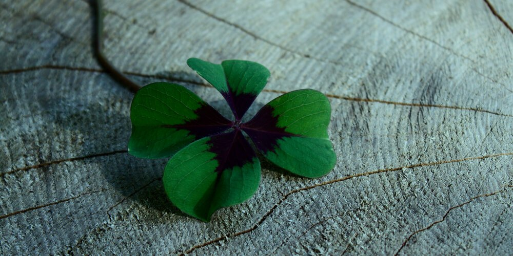 Clover with 4 leaves
