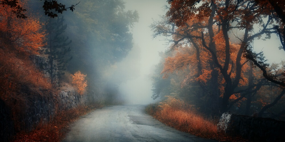 Dark foggy road in the fall