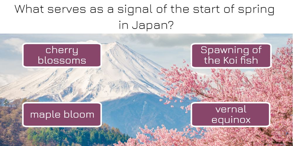 What serves as a signal of the start of spring in Japan?