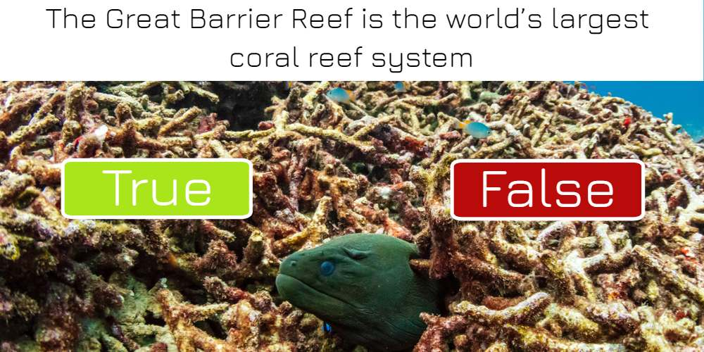 The Great Barrier Reef is the world's largest coral reef system: true or false? Answer now!
