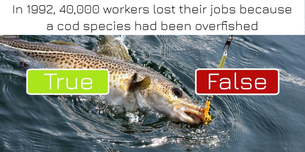 In 1992, 40,000 workers lost their jobs because a cod species had been overfished: true or false? Answer now!