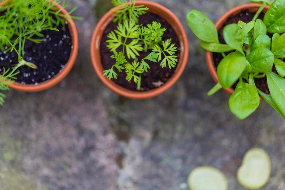 Astro-Herb for Libra