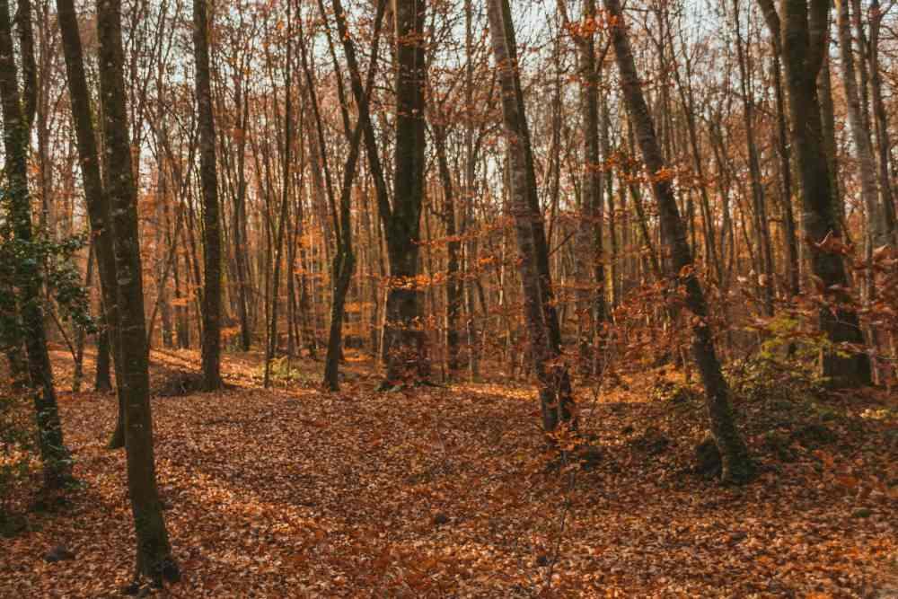 How September Equinox Affects Aries