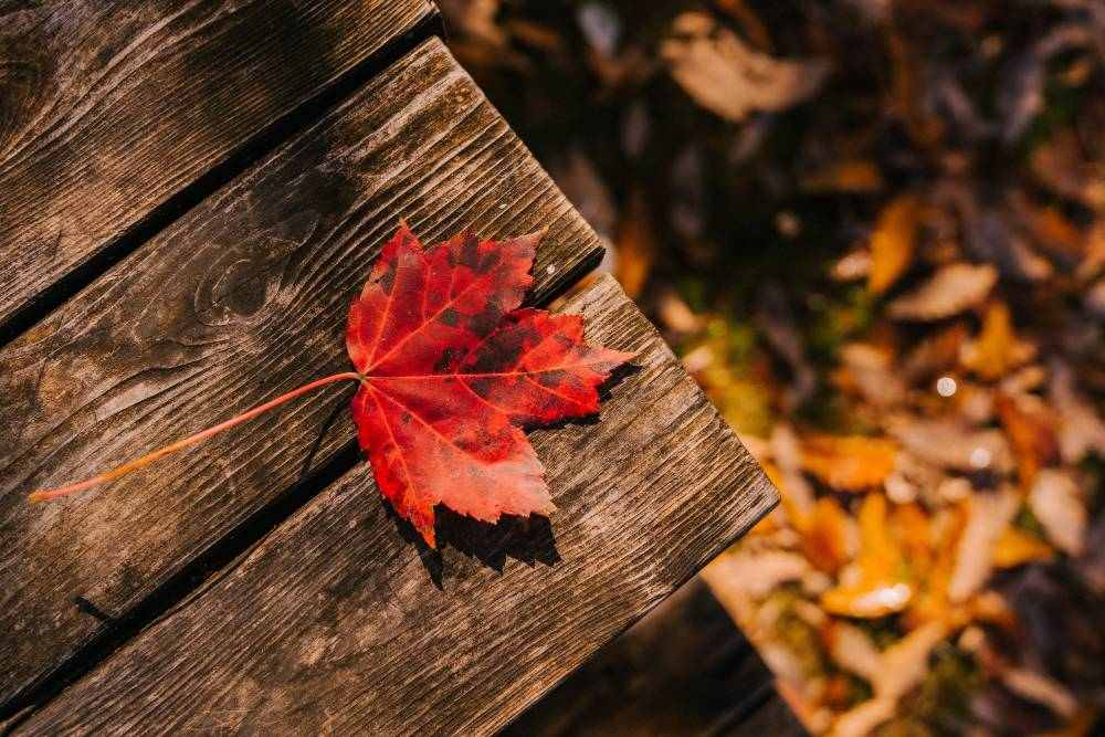 How September Equinox Affects Cancer
