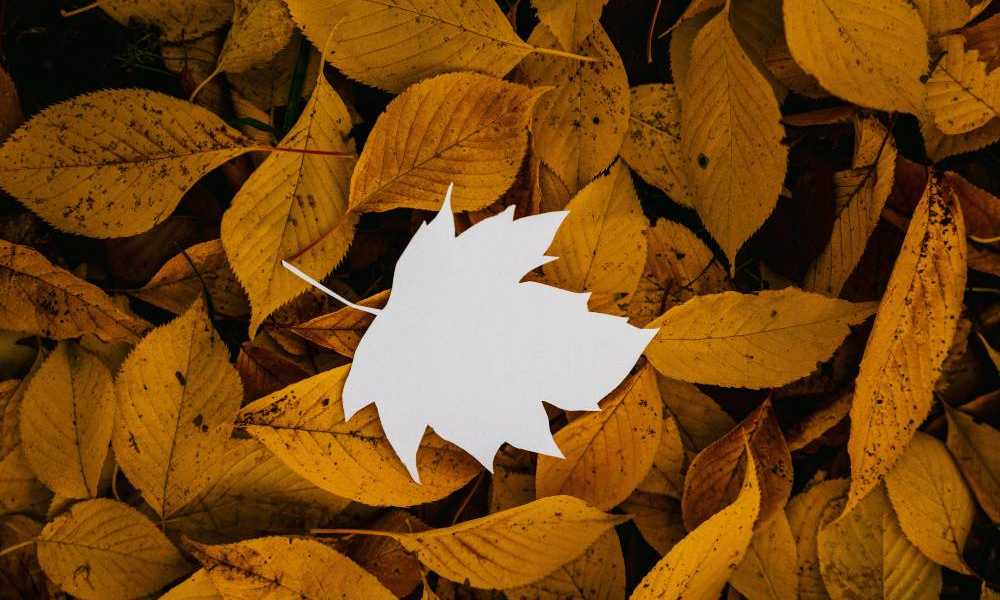 How September Equinox Affects for Capricorn