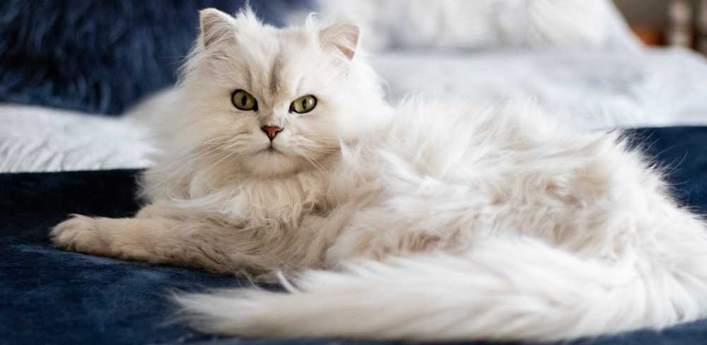 A perfect pet companion for Aries