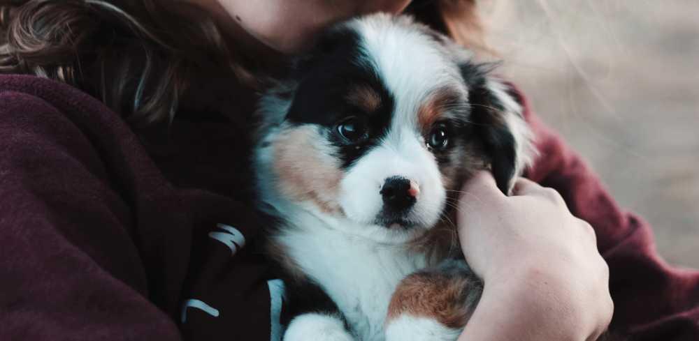A perfect pet companion for Capricorn