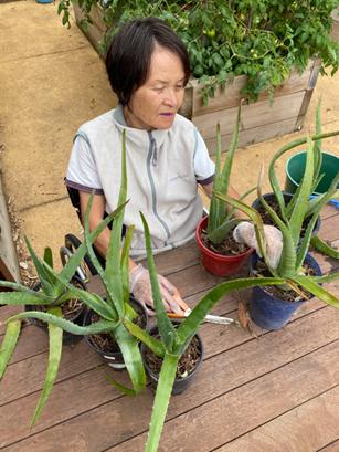 Women with aloe vera plants