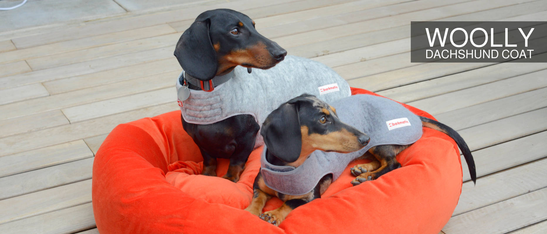 Barkmatic dachshund wolly coat