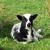 Jacob lamb mleshr