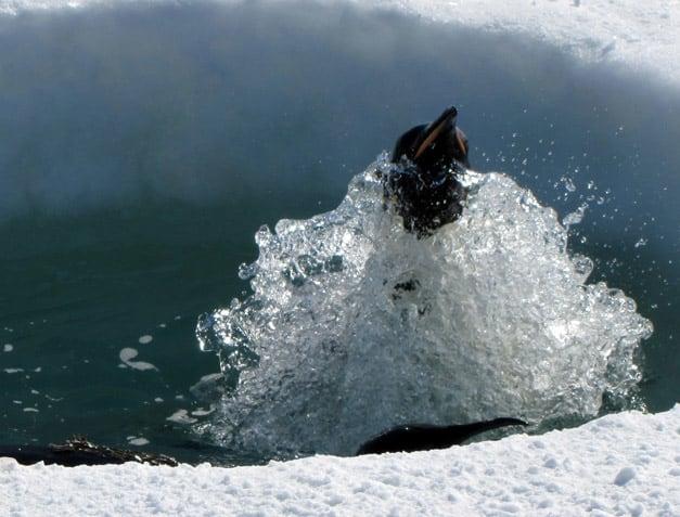 news_feat_icecube-scientist-m-krasberg-wins-uw-madison-cool-science-image