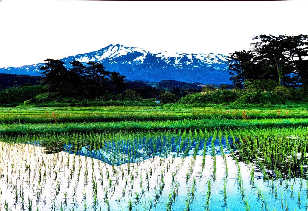Cover of postcard from Shigeru Yoshida (Chiba University, Japan)