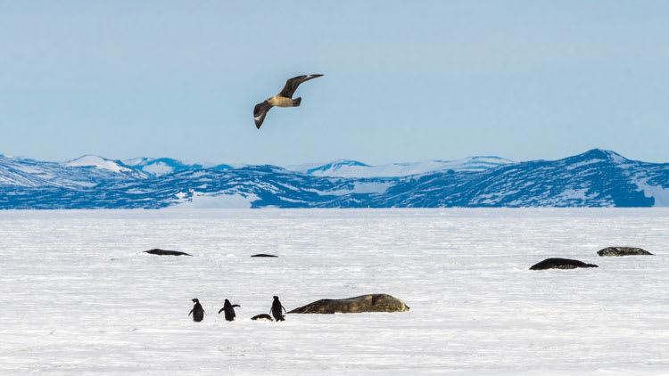 animalsMcMurdo