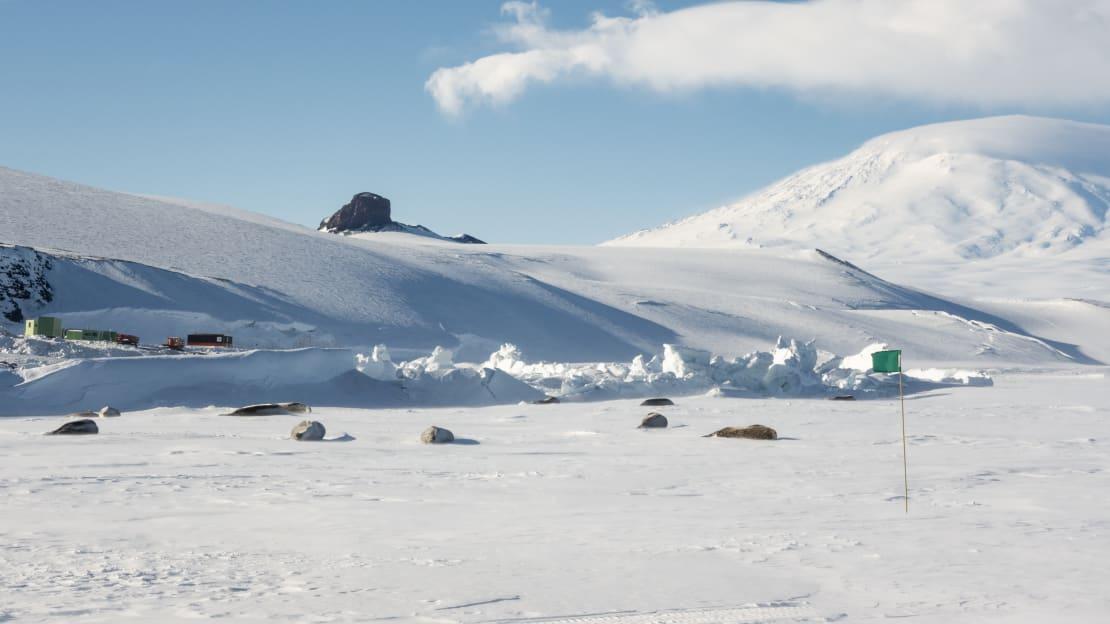 Seals lying on surface of ice near pressure ridge.